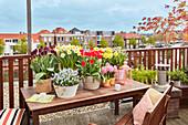 Topf - Arrangement mit Narzissen, Tulpen, Traubenhyazinthen und Hyazinthen auf Dachterrasse
