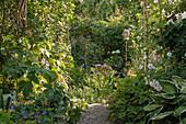 Weg zwischen Beeten im Schattengarten