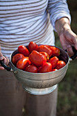 A woman holding tomatoes in a colander