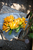 Courgette flowers on a wooden chair