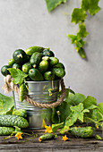 Garden cucumbers in a metal bucket