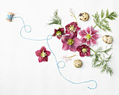 Legebild aus Blüten von Lenzrose, Dill, Wachteleier und Schnur