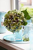 Grüne Hortensienblüte in der Vase