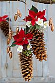 Weihnachtsdekoration mit Zapfen, Weihnachtsstern, Christrose