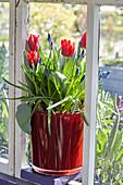 Topf mit Tulpen und Traubenhyazinthen