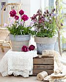 Töpfe mit Tulpen, Hasenglöckchen, Schachbrettblumen und Akelei