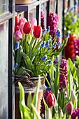 Wandtopf mit Tulpen und Traubenhyazinthen