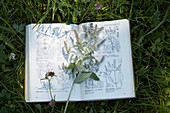 A mint branch on a plant identification book in the grass