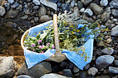 Freshly collected wild herbs in a willow basket with a blue-white cloth