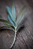 An olive sprig on a wooden surface