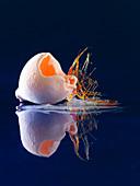 A 'lost egg' balloon (molecular gastronomy)