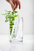 Woman's hand arranging fresh herbs in a glass with large artisan ice cubes