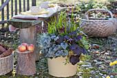 Herbstzauber Bepflanzung: Purpurglöckchen, Segge, Greiskraut, Efeu und Knospenheide