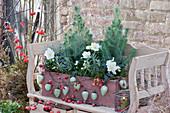 Holzkasten weihnachtlich mit Pinien, Christrosen und Lavendel, dekoriert mit Christbaumschmuck, Hagebutten und Zieräpfeln
