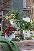 Weihnachtlich geschmücktes Arrangement mit Christrose, Scheinbeere, Segge, Purpurglöckchen und Drahtwein