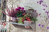 Töpfe mit Knospenheide, Alpenveilchen und Dekoration aus Zieräpfeln und Zweigen auf Wandbord