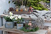 Winterliches Arrangement mit Christrosen, Windlichtern und Zapfen