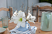 Weiße Blüten von Amaryllis im emaillierten Milchtopf