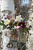 Sträußchen aus Blüten von Christrosen und Schneeglöckchen im Glas an Birke gehängt