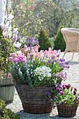 Frühlingsterrasse mit Tulpen 'Dynasty', Gänsekresse, Rosmarin, Ranunkeln, Stiefmütterchen und Goldlack in Körben