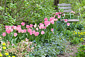 Gartenstuhl im Frühlingsbeet mit Tulpen 'Dynasty', Gedenkemein, Wolfsmilch und Lenzrose