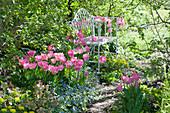 Bank im Frühlingsbeet mit Tulpen 'Dynasty' , Gedenkemein, Wolfsmilch und Lenzrose