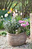 Blühender Rosmarin kombiniert mit Ranunkeln, Tulpen und Moossteinbrech