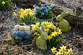 Holz- Osterhasen und Korb mit Ostereiern im Garten zwischen Narzissen 'Tete a Tete' und Vergißmeinnicht im Korb