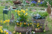 Ostern im Garten: Narzissen 'Rip van Winkle', Hornveilchen, Vergißmeinnicht, Kerbel und Steinkraut, Osterhasen und Ostereier