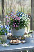 Vergißmeinnicht - Trio in weiß, rosafarben und blau, Hornveilchen, Steckzwiebeln und Kranz aus Zweigen