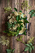 Freshly picked elderflowers