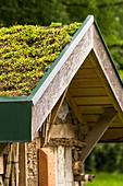 Dachbegrünung mit Mauerpfeffer