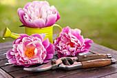 Pfingstrosen - Blüten