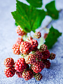 Tendrils of unripe blackberries