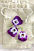 Blüten von Hornveilchen auf Geschenktüte