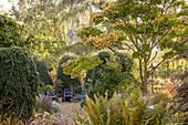 Farn und japanischer Ahorn im Garten im Hintergund Gartenstühle (Kreislehrgarten, Steinfurt, Deutschland)