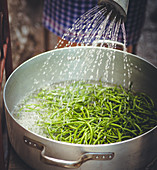 Green beans in a pot being watered with a watering can