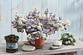 Mondstein mit Blüten