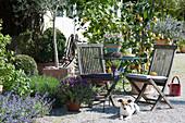 Kleine Sitzgruppe auf mediterraner Kiesterrasse mit Zitronenbäumen, Schopflavendel und Bohnenkraut, Hund Zula, Katzenminze im Beet