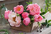 Frisch geschnittene Blüten von Pfingstrose in Holzkiste