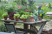 Salatpflanzen, Kohlrabi, Gurke, Petersilie, Schnittlauch und Erdbeere im Topf