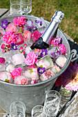 Sektflasche mit Blüten und Eiswürfeln mit eingefrorenen Blüten im Zinkeimer im Garten