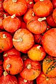 Lots of Hokkaido pumpkins