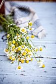 Fresh chamomile flowers on a garden table