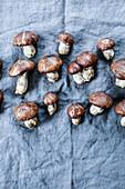 Fresh slippery Jack mushroom on a cloth