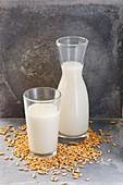 Oatmeal and oat grains