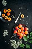 Stilleben mit Aprikosen und Holunderblüten