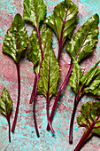 Fresh beetroot leaves