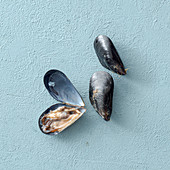 Mussels, closed and open