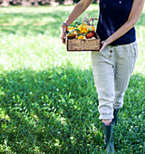 A woman in a garden carrying a crate of vegetables